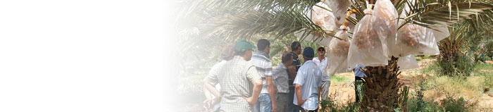 Group standing below date palm(c)FiBL